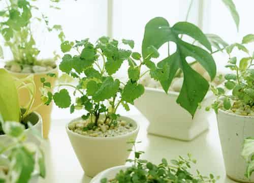 18种适合室内养的植物图片以及常见室内植物
