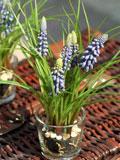 设计 花卉养殖/家庭花卉养殖大全揭露6种最常见的家庭花卉养殖图2011/03/17...