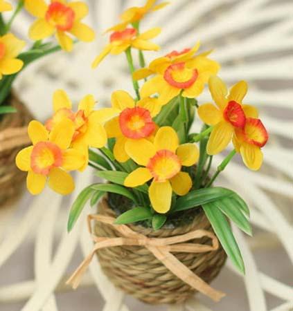 家庭 花卉养殖/家庭花卉养殖大全揭露6种最常见的家庭花卉养殖图片