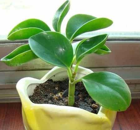 室内绿色植物名称及图片欣赏