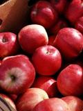 吃苹果减肥法原理及注意事项