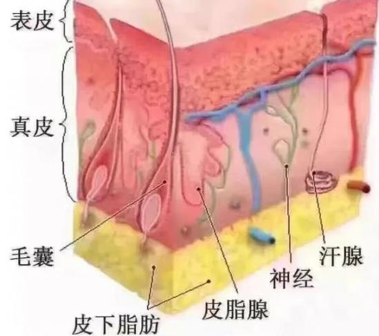 痘印形成的原因 痘印产生原因及淡化痘印的方法