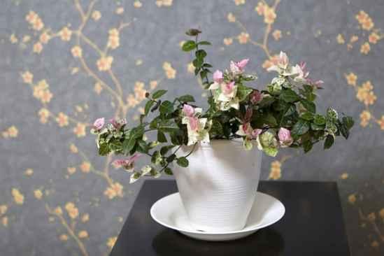 室内花卉图片大全 展示6种适合在室内养的植物