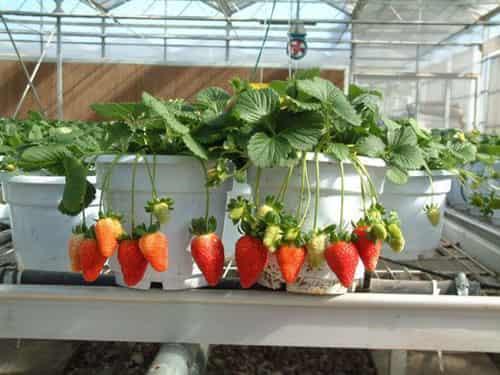 6款适合家养的花草 打造浪漫田园风情生态家居图片