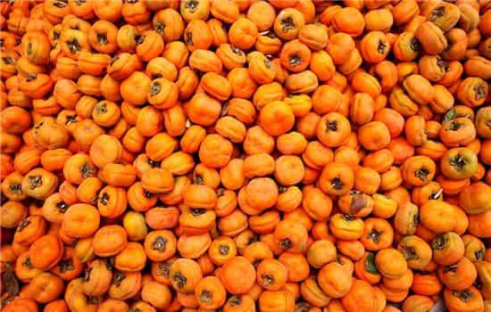 柿子醋的制作方法,柿子醋的做法,柿子醋怎么做