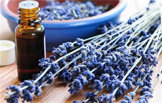 薰衣草精油怎么用,薰衣草精油如何使用,薰衣草精油的使用方法