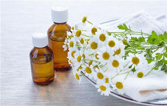 洋甘菊精油的功效与作用,洋甘菊精油的功效及作用,洋甘菊精油作用