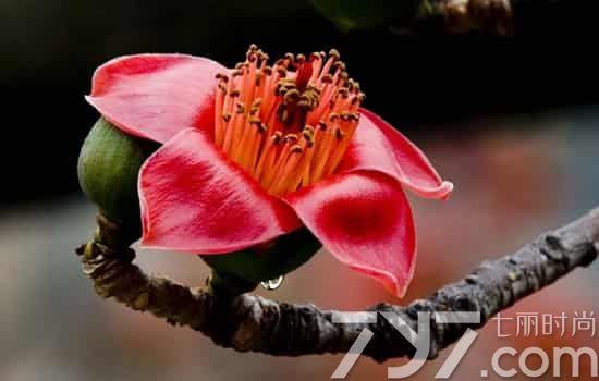 哪些花可以吃,哪些花能吃,什么花可以吃