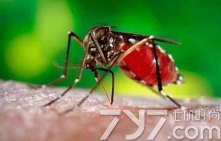 宝宝被蚊子咬了起水泡,孩子被蚊子咬了起水泡是怎么回事,宝宝被蚊子咬了起水泡怎么办 七丽女性网