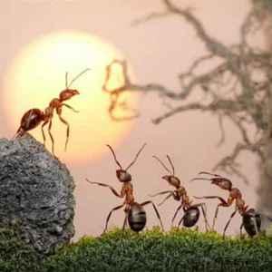 厨房有蚂蚁怎么除根 教你见效除蚁6妙招