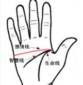 感情线和生命线连在一起   手相图解之感情盲目型or感情牺牲型