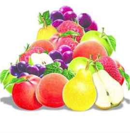 春季上火吃什么水果好 8种水果缓解春天上火