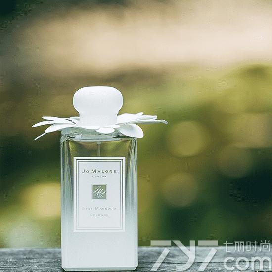 祖马龙星花木兰好闻吗四月木兰的香气