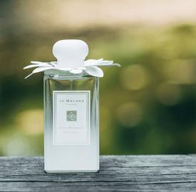 祖马龙星花木兰好闻吗 四月木兰的香气