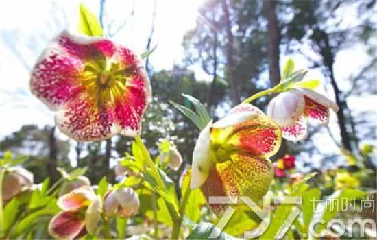 蔷薇花的花语是什么 不同颜色蔷薇花代表的寓意