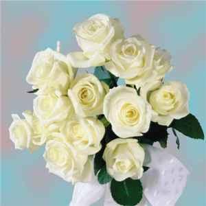白玫瑰的花语是什么 不同朵数白玫瑰代表的寓意