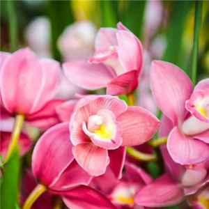 什么花的花语是幸福 为她送上满满的幸福感