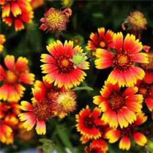 什么花的花语是离别 7种花暗含分别之情