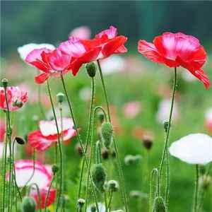 什么花的花语是悲伤 7种花代表忧伤之情