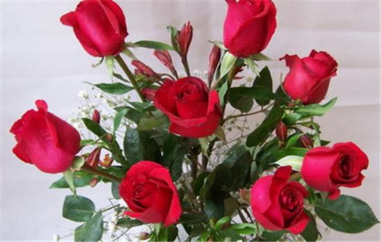 玫瑰花朵数代表的含义 最浪漫的竟然不是11朵