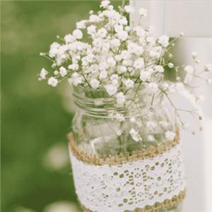 满天星的花语是什么 竟然比玫瑰更纯情