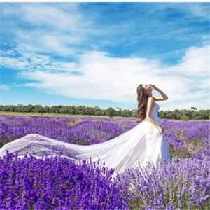 薰衣草的花语是什么 浪漫和等待无望的爱