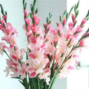 兰花的花语是什么 高洁典雅美好的象征