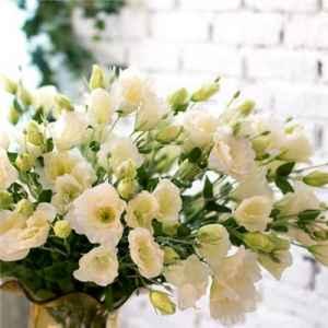 桔梗花的花语和图片 象征永恒不变的爱