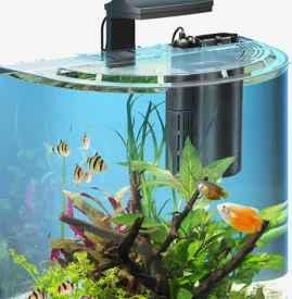 办公室养鱼的风水讲究 提升财运的必读知识