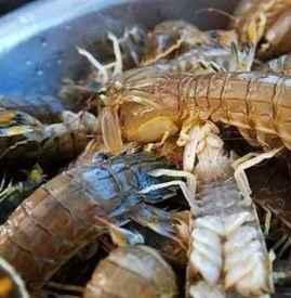 皮皮虾怎么挑选 如何挑出鲜活又好吃的皮皮虾