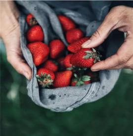 草莓的饮食禁忌 草莓千万别和它一起吃