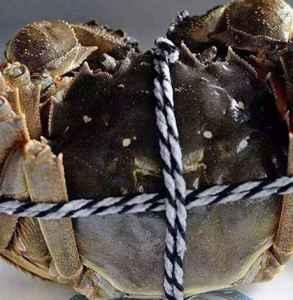 大闸蟹为什么绑起来