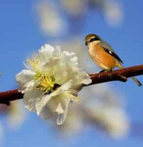 春分是立春吗 春分不是立春