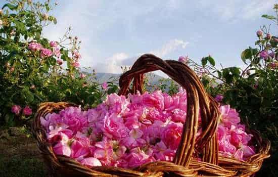 土耳其玫瑰水功效 补水保湿适合油皮