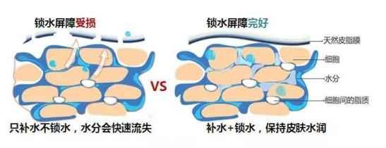 皮肤补水多了会怎么样 一味的补水反而害了皮肤