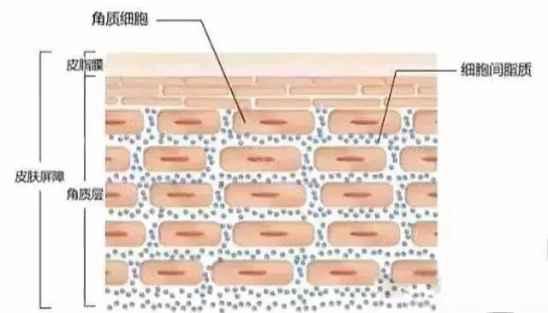 什么是皮肤屏障