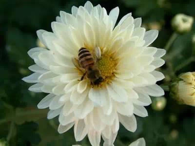 美白祛斑的小妙招 7个好用不贵的美白祛斑偏方