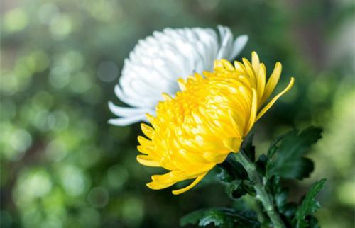 日常护眼多补叶黄素,来看看叶黄素的功效与作用是什么!