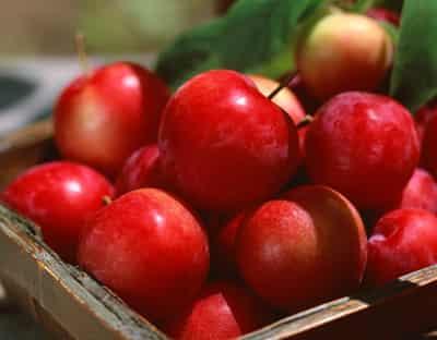 [三日苹果减肥法有效吗]三日苹果减肥法 懒人狂甩15斤方法