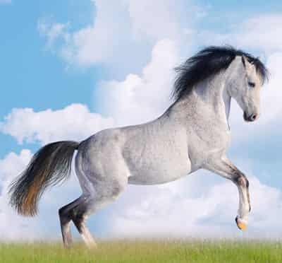 2014年马年是什么命|2014马年大吉 解析属马的人性格特点