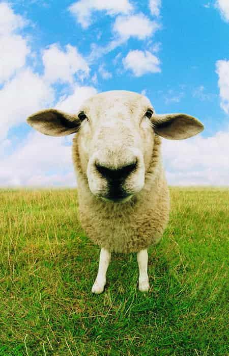 [2014年的属什么]2014年属羊之人生肖运势 四大运势全面分析