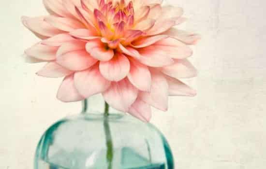 最简单的花_蝴蝶兰安全过冬最简单的方法,选对花正确养