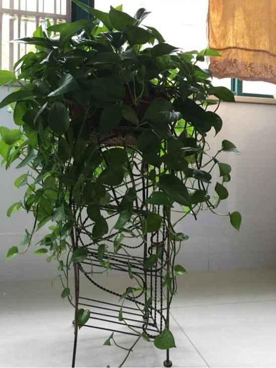 家里养什么植物好风水 家里养这些植物最合适