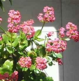 书房放什么植物最好 这六种植物适合放在书房