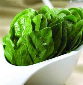 菠菜可以生吃吗 菠菜是不能生吃的