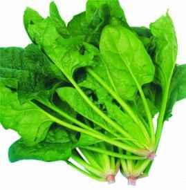 菠菜吃多了有什么害处 蔬菜吃多了竟然也有害