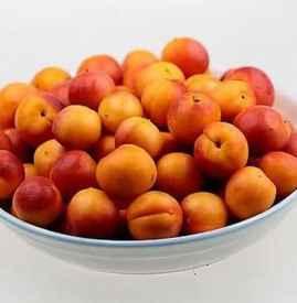 杏子和李子的区别 5个不同点教你分辨李和杏
