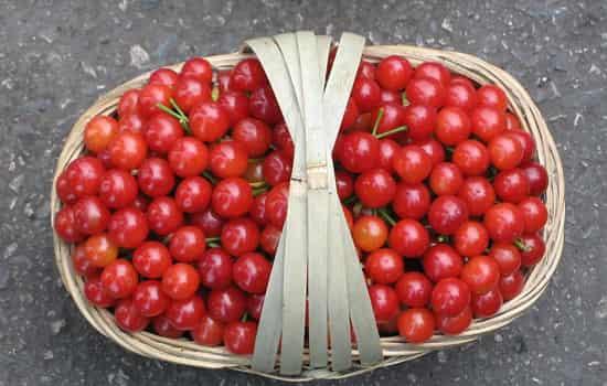 吃樱桃会胖吗 不会胖但忌把樱桃当减肥利器