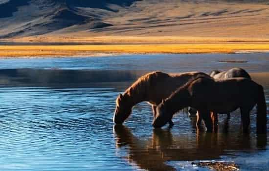 和狗做完和马做 狗和马相冲吗 狗和马组合是三合贵人