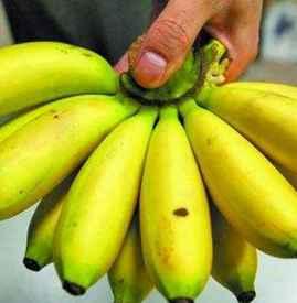 吃芭蕉会胖吗 注意正确且适量吃即可